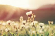 Consejos para correr en primavera si eres alérgico